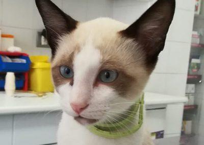 Plan Salud Cat-kitten